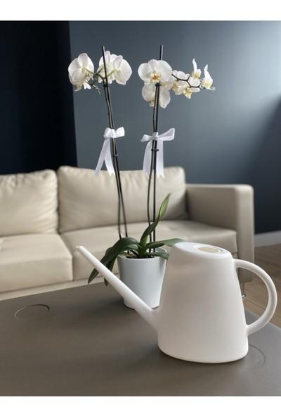 Elite Plast Sulak Çiçek Sulama Kabı 1,7 Lt Beyaz Renk