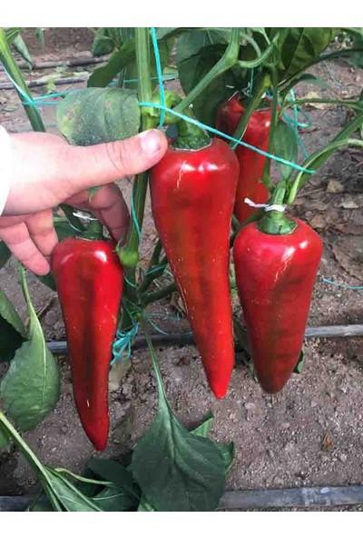 Çam Tohum Acı Kırmızı Kapya Biberi Tohumu Ekim Seti Kapya Biber Tohumu 20 Tohum Saksı Toprak Kombin