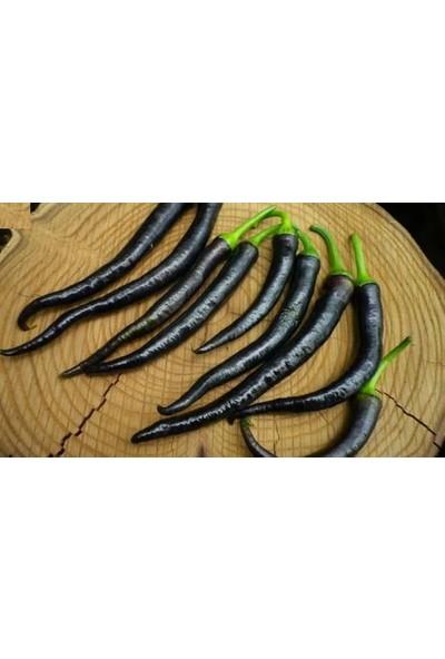 Çam Tohum Nadir Ithal Çok Acı Siyah Sivri Biber Tohumu Ekim Seti 5 Tohum Saksı Toprak Kombin