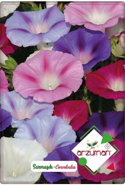 Arzuman Sarmaşık Çiçeği Tohumu 50 Adet Karışık Renk