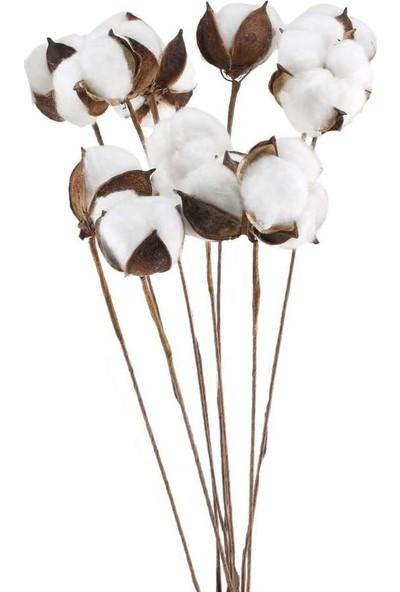 Nettenevime Pamuk Çiçeği Kuru Çiçek 5 Adet Tek Dal Yapay Çiçek