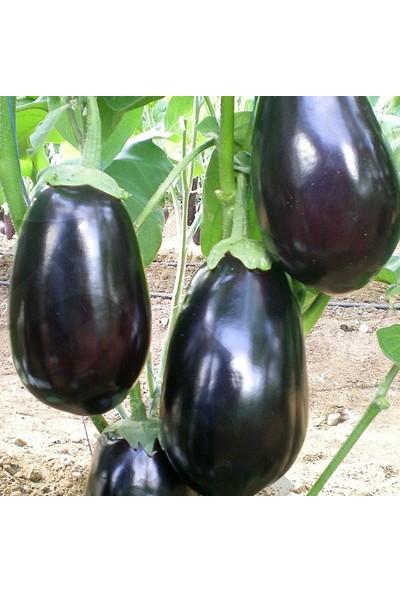 Murat Tohumculuk Murat Tohum Iri Dev Patlıcan Tohumu Ekim Seti 10 Adet Tohum Saksı Toprak