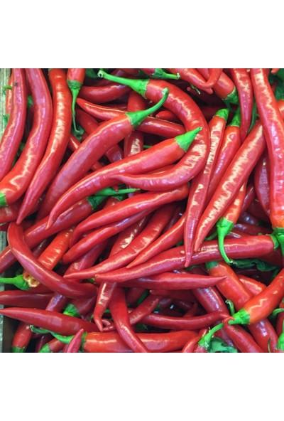 Murat Tohumculuk Murat Tohum Şili Biberi Tohumu Çok Acı Chili Biber Tohumu Ekim Seti 20 Adet Tohum Saksı Topak