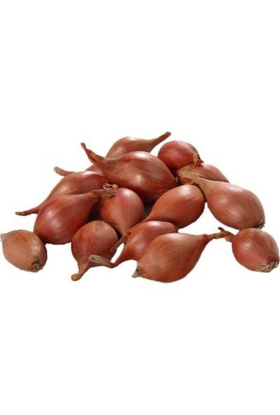 Tohumcumm 50 Adet Kıska Soğan Tohumu Soğan Kıskası