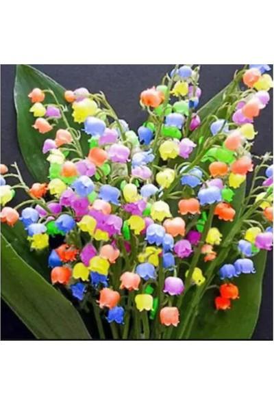 Çam Tohum Çok Nadir Çan Orkide Çiçeği Tohumu Ekim Seti 5 Tohum Çiçek Tohumu Saksı Toprak Kombin