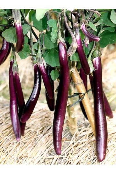Çam Tohum Nadir Ithal Dev Kemer Patlıcan Tohumu Ekim Seti 5 Tohum Saksı Toprak Kombin