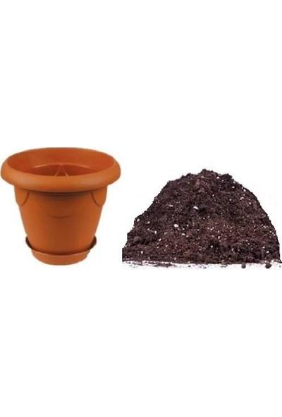 Çam Tohum Nadir Ithal Jalapeno Biberi Tohumu Ekim Seti 5 Tohum Meksika Biberi Tohumu Saksı Toprak Kombin