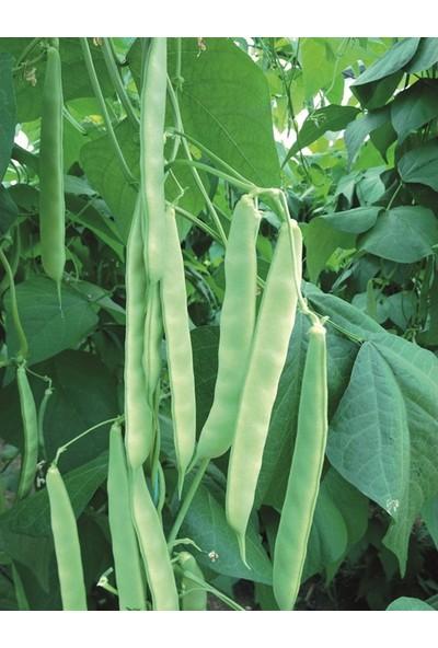 Tohumcumm Kılçıksız Yediveren Fasulye Tohumu 20 Fasülye Tohumu
