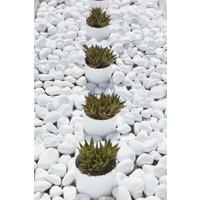 Cm Doğal Cmdoğal 500 gr Dolomit Taş 2 - 4 cm Dekoratif Bahçe Saksı Akvaryum Teraryum Taşı