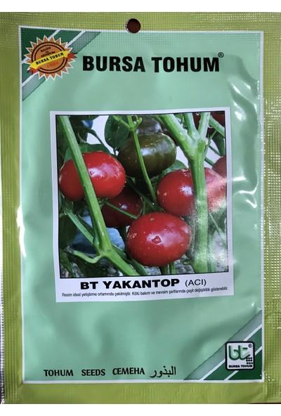 Karahasanoğlu Tarım Biber Tohumu Yakantop (Süs Biberi Yuvarlak Acı) 25 gr 3000 Ad