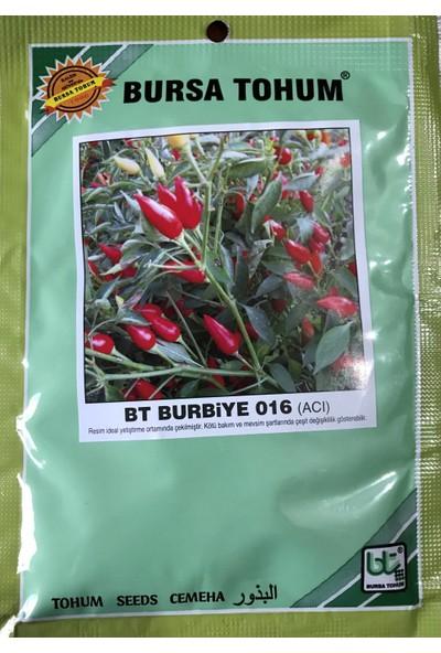 Karahasanoğlu Tarım Biber Tohumu Burbiye (Süs Biberi Oval Acı) 25 gr 3000