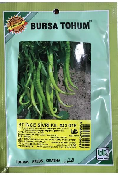 Karahasanoğlu Tarım Biber Tohumu Ince Sivri Kıl Acı (25 gr 3000 Tohum)