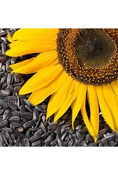 Tohumcumm Ay Çekirdeği Çiğdem Güne Bakan Tohumu 15 Adet Çekirdek Tohumu