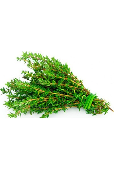 Tohumcumm Kekik Tohumu Aromatik Dağ Kekiği Tohumu 25 Adet Tohum