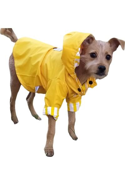 Oli And Lui Yellow Stripes Köpek Yağmurluğu
