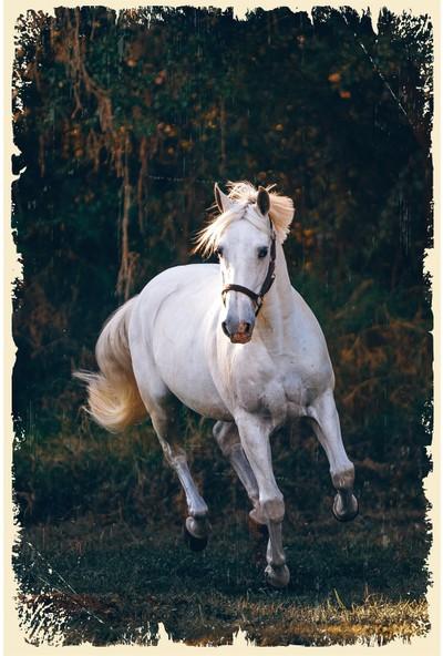 Hayal Poster Beyaz At Ahşap Poster