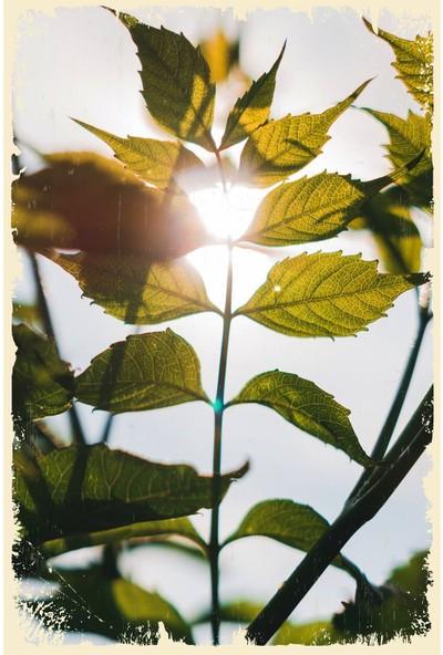 Hayal Poster Yapraklar ve Güneş Ahşap Poster