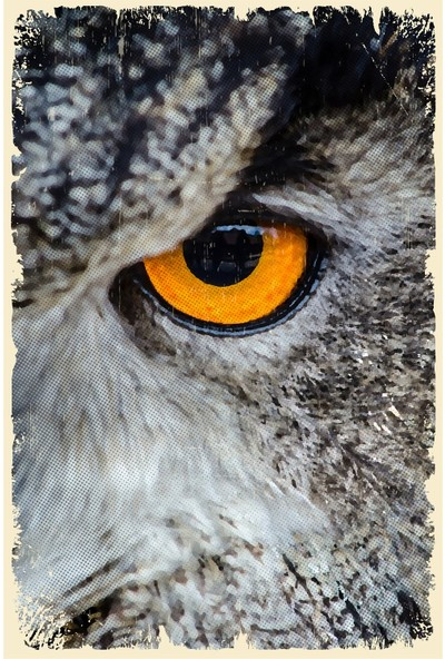 Hayal Poster Baykuş Temalı Ahşap Poster