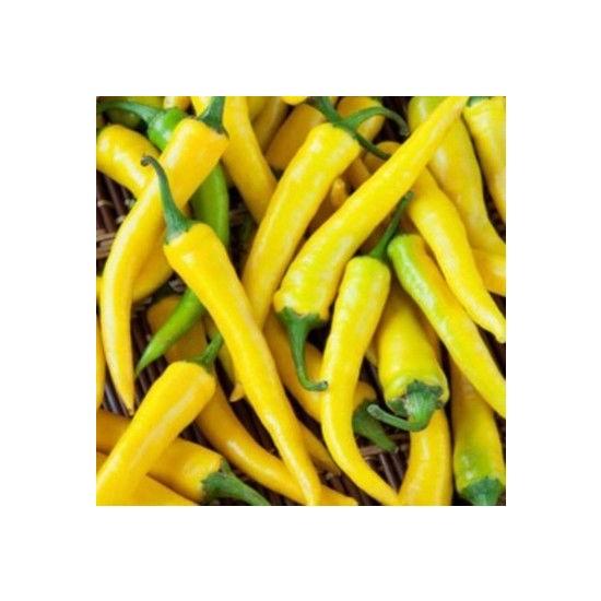 Çam Tohum Sarı Stone Turşuluk Biber Tohumu Acı Süs Biberi