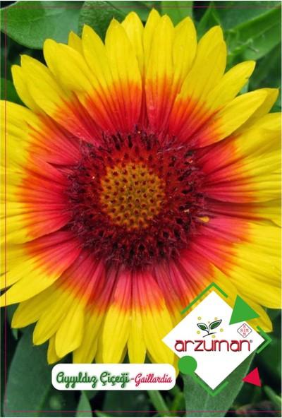 Arzuman Ay Yıldız Çiçeği Tohumu (50 Adet)