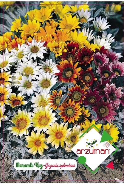 Arzuman Meramlı Kız Çiçeği Tohumu (20 Adet)