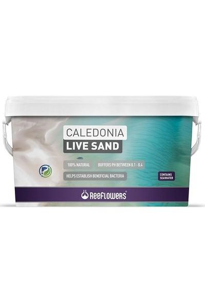Reeflowers Caledonia Live Sand Gold 18 kg Deniz Akvaryumları Için Canlı Kum