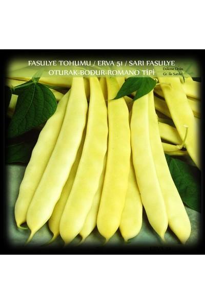 Fasülye Tohumu 2 kg. (5000+ Adet) ERVA51 Sarı Özel Fasulye Tohumu