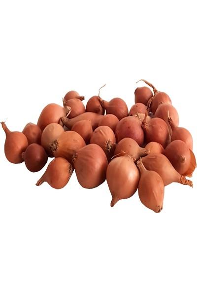 Kıska Soğan 500 gr. Arpacık Soğan Iska Soğan Tohumu