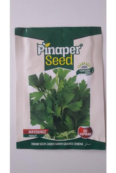 Pinaper Seed Maydanoz Tohumu 1 Paket Geniş Yapraklı Maydanoz