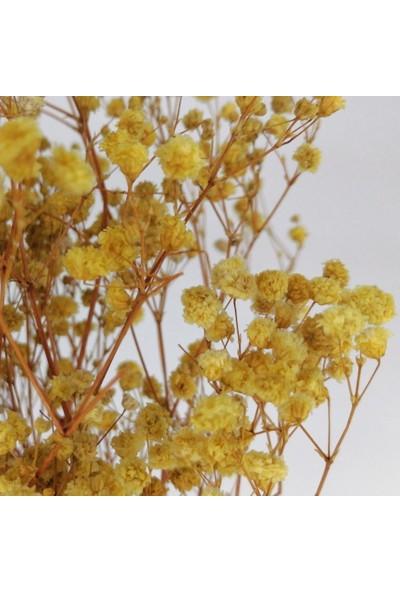 Nettenevime Kuru Çiçek Doğal Sarı Cipso 22GRAM 1. Kalite Şoklanmış Bozulmaz