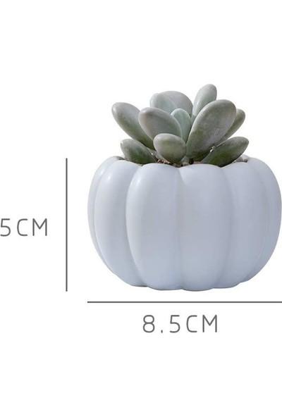 Oksu Kokulu Taş 4 Adet Mini Kabak Saksı Kaktüs Sukulent Saksıları Modern Yaratıcı Ev Dekoru