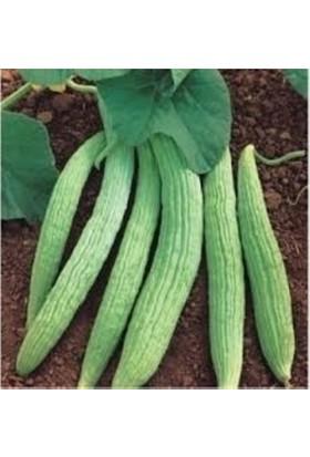 Agrobazaar Acur Tohumu Hita 100 gr
