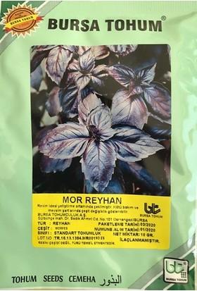 Mor Reyhan Tohumu 10GR