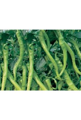 Biogen Tohumculuk Biber Tohumu Acı Ilıca 500 Gr-Teneke