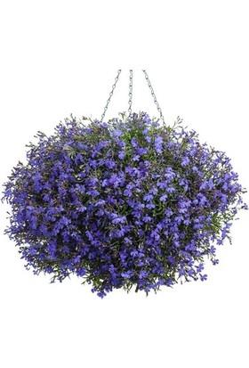 Agrobazaar Mavi Lobelya Çiçeği Tohumu