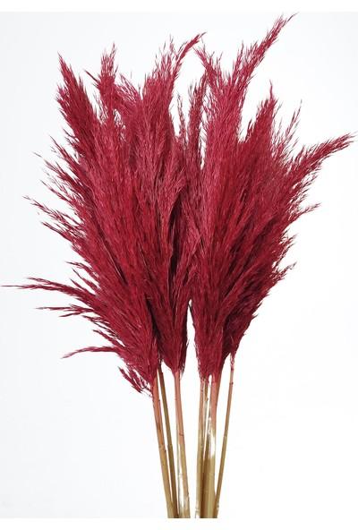 Eçiçek Şoklanmış Pampas Otu 15'li Demet Kırmızı Renk