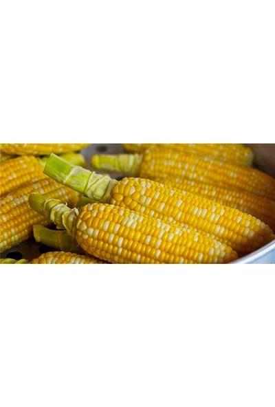 Agrobazaar Tatlı Haşlamalık Mısır Tohumu 10 + Adet Tohum