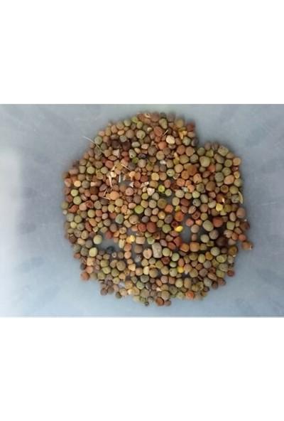 Agrobazaar Macar Figi Tohumu 10 kg