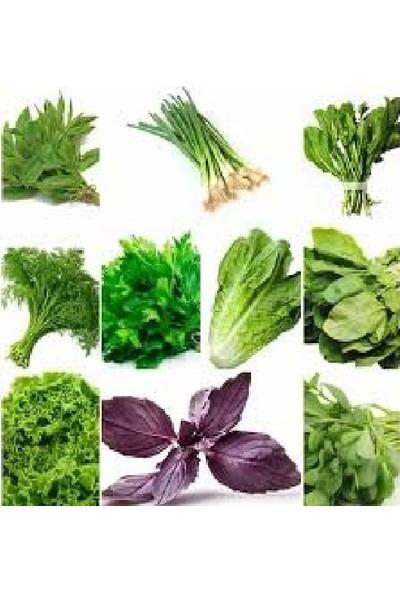 Agrobazaar 1000 Adet Muhteşem Yeşillik Tohumu Paketi-10 Farklı Çeşit