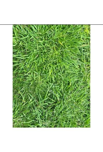 Agrobazaar Anka Seeds Çim Tohumu 1 kg
