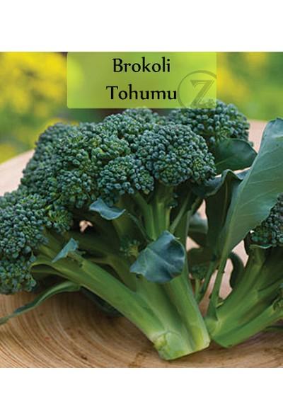 Fenton Brokoli Tohumu 1 Paket (1 GR=250+ Adet)
