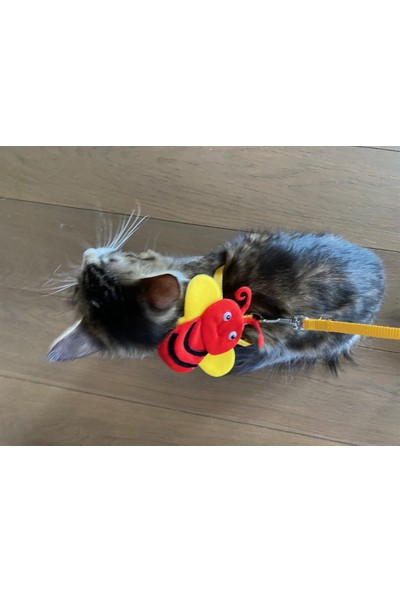 maxilife Kırmızı Arıcık Kedi ve Köpek Gezdirme ve Göğüs Tasma Seti