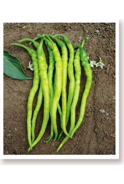 Agro Tohum Ata Tohumu Yerli Sivri Biber Acı Kıl 1 gr Yaklaşık 100 Adet Tohum