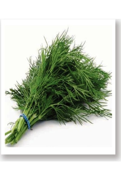 Agro Tohum Ata Tohumu Yerli Dereotu Ferah 1 gr Yaklaşık 500 Adet
