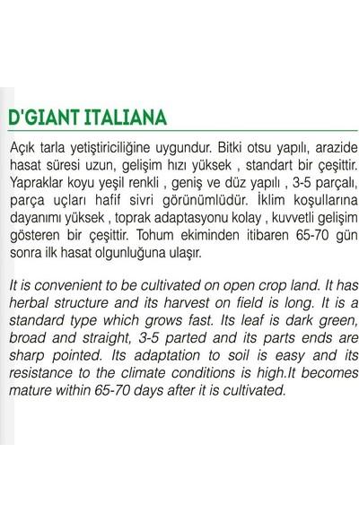 Agro Tohum Ata Tohumu Yerli Maydanoz 5 gr Yaklaşık 2500 Tohum