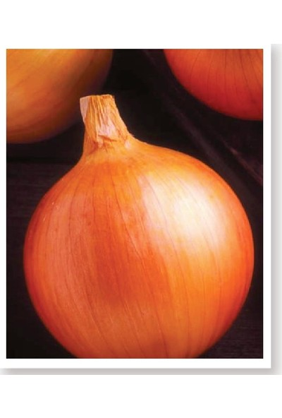 Agro Tohum Ata Tohumu Yerli Soğan Akyol 1 gr 250 Adet Tohum