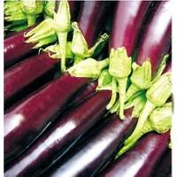 Tohum Diyarı Kemer Patlıcan Tohumu 10+ Tohum