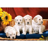 Castorland 1000 Parça Puppies With Sunflower
