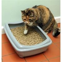 Petimister Doğal Çam Pellet Kedi Kumu 10 Kg