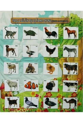 Tox Resmi Tamamlama Evcil Hayvanlar Eğitici Pano